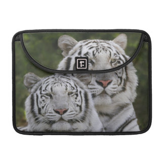 White phase, Bengal Tiger, Tigris Sleeve For MacBooks