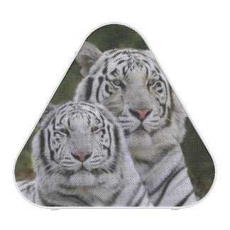 White phase, Bengal Tiger, Tigris Speaker