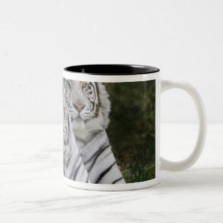 White phase, Bengal Tiger, Tigris Two-Tone Coffee Mug
