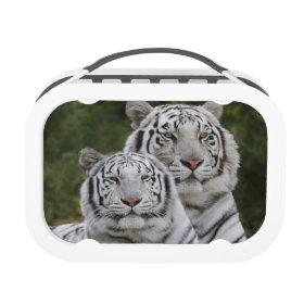 White phase, Bengal Tiger, Tigris Yubo Lunch Box