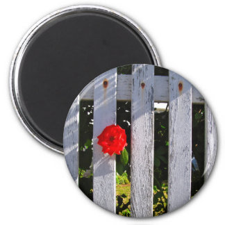 White picket fence red rose magnet
