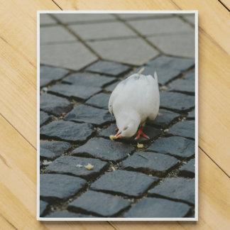 White pigeon chocolate countdown calendars