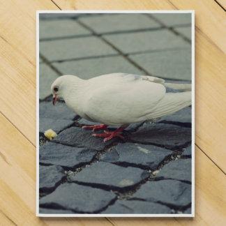 White pigeon countdown calendar