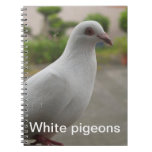 White pigeons Notebook
