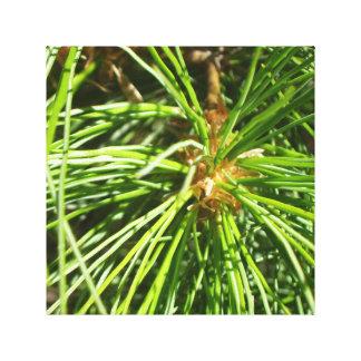 White pine canvas