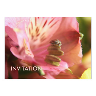 White/Pink Alstroemeria Flower INVITATION 13 Cm X 18 Cm Invitation Card