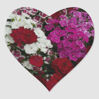 White, Pink and Red Dianthus Floral Photography Heart Sticker