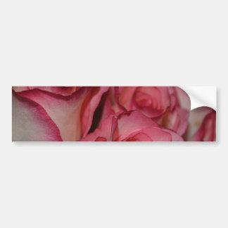White Pink Edge Roses Bumper Sticker