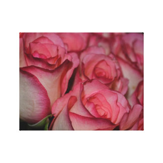 White Pink Edge Roses Canvas Print