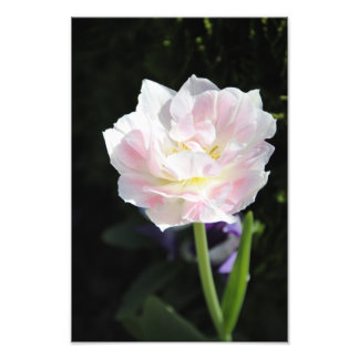 White pink flower art photo