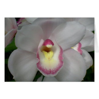 White Pink Orchid Card