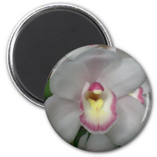 White Pink Orchid Magnet