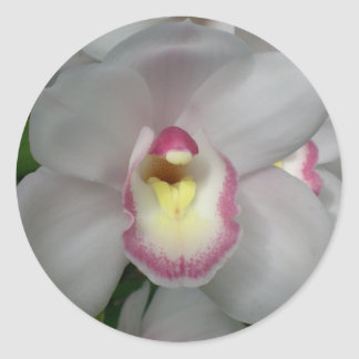 White Pink Orchid Stickers