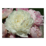 White Pink Peonies / Pink Peony Note Cards