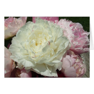 White Pink Peonies Pink Peony Note Cards