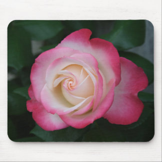 White-Pink Rose Mouse Pad