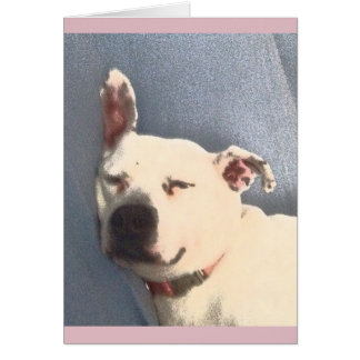 White Pit Bull Sleeping Card