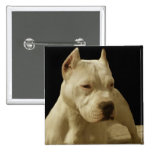 White pitbull pinback buttons