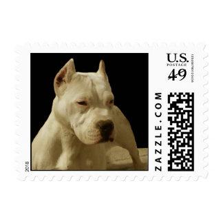 White pitbull postage stamp
