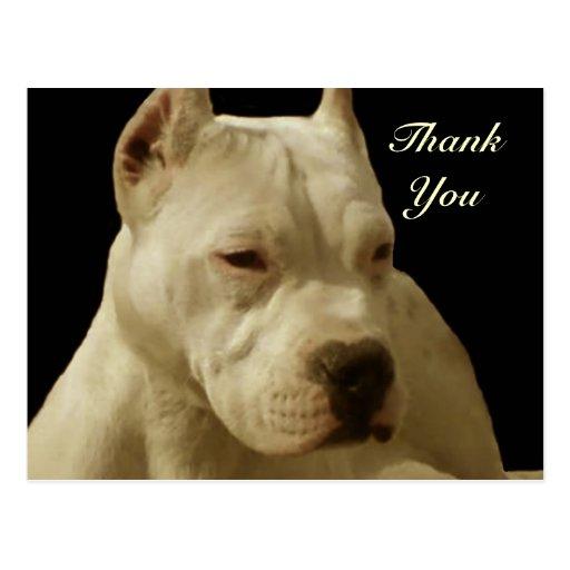 White pitbull postcard
