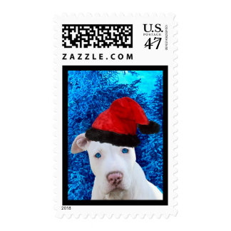 White Pitbull Puppy Dog in Santa Hat for Christmas Postage