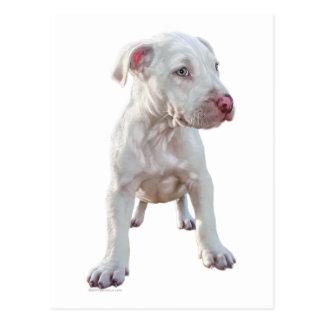 White Pitbull Puppy Postcard