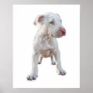 White Pitbull Puppy Poster