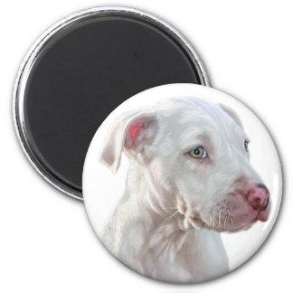 White Pitbull Puppy Refrigerator Magnet
