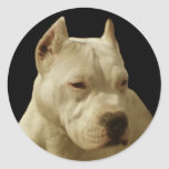 White pitbull stickers