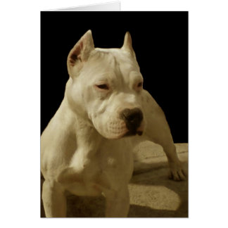 White Pitbull Terrier Card