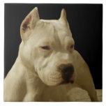 White Pitbull Terrier Tiles