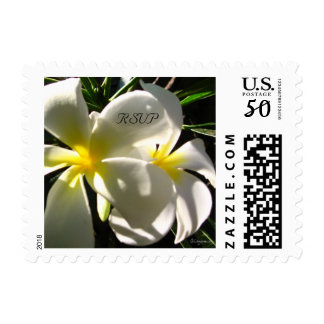 White Plumaria Save the Date Small Wedding Stamps