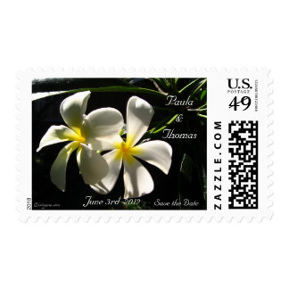 White Plumaria Wedding Save the Date Postage Stamp