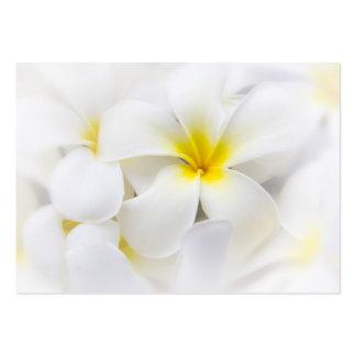 White Plumeria Flower Frangipani Floral Flowers Business Card Templates