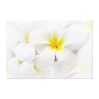 White Plumeria Flower Frangipani Floral Flowers Canvas Print