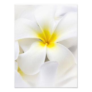 White Plumeria Flower Frangipani Floral Flowers Photo Print