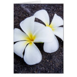 White Plumeria Flower Frangipani Floral Lava Rock Card