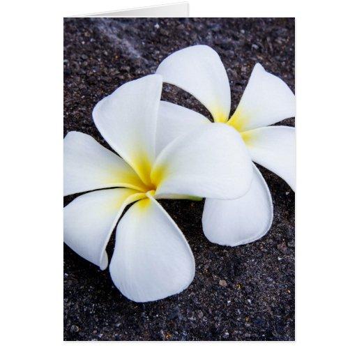 White Plumeria Flower Frangipani Floral Lava Rock Cards