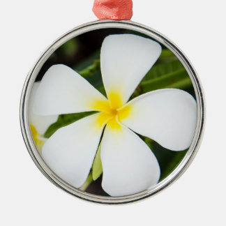 White Plumeria Flower - Frangipani Floral Template Metal Ornament
