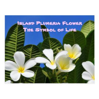 White Plumeria Flower Hawaiian Postcard