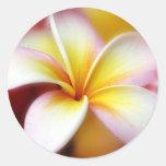 White Plumeria Frangipani Hawaii Flower Hawaiian Classic Round Sticker
