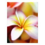 White Plumeria Frangipani Hawaii Flower Hawaiian Photo