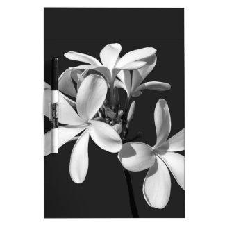 White Plumeria in full bloom Dry-Erase Board
