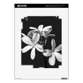 White Plumeria in full bloom iPad 3 Skins