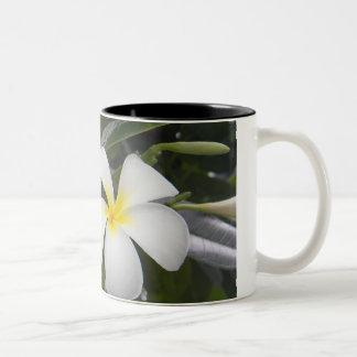 White Plumeria Mug