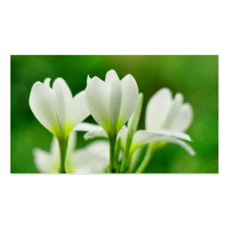White Plumeria or Frangipani Business Card