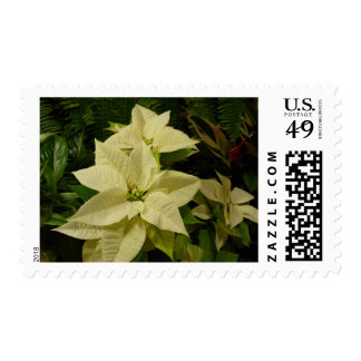 White Poinsettia Holiday Postage Stamps