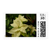 White Poinsettia Holiday Postage Stamps