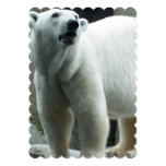 "White Polar Bear 5"" X 7"" Invitation Card"
