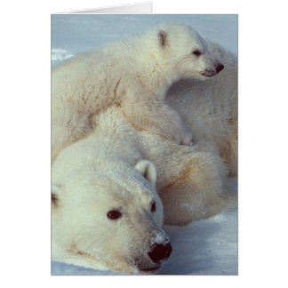 White Polar Bear family Card